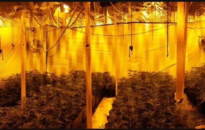 In de hennepkwekerij zijn 131 planten aangetroffen.