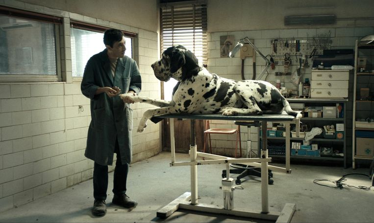 Marcello Fonte in Dogman. Beeld null