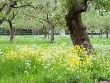 Brediuspark in Woerden gaat compleet veranderen
