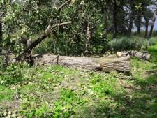 Geen nader onderzoek naar bomen op Haardijk na dodelijk ongeluk met fietser