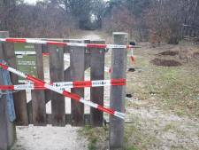Moederkoe loopt nog vrij - en gestresst - in Maashorst