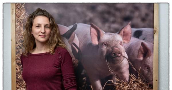 Dierenarts werkt nu bij Varkens in Nood: 'Onzinnig om vooral