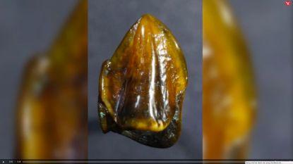 Tanden van 9,7 miljoen jaar kunnen geschiedenis van de mens omgooien