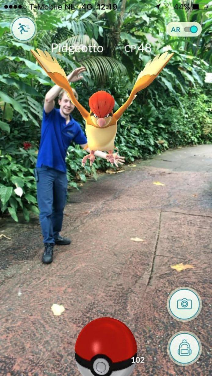 Pidgeotto vangen in Burgers' Zoo.
