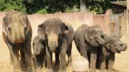 Zeker 87 olifanten gestroopt in reservaat in Botswana