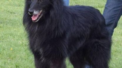 Zoektocht naar gestolen hond Gento