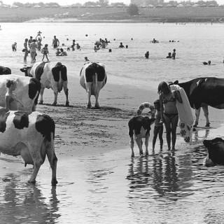 Terug naar de zomer van 1976: de gloeiend hete zomer 'waarin iedereen jong en naakt was'