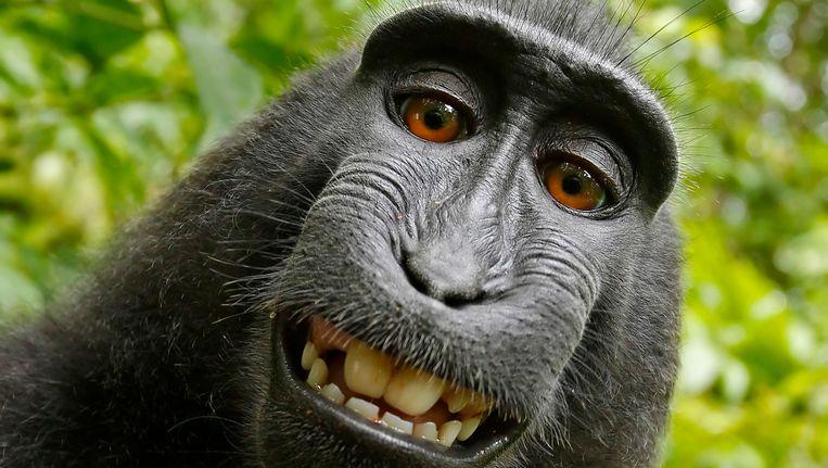 Een van de foto's die de aap met het toestel van Slater maakte. Beeld ap