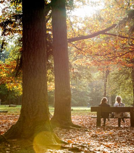 Boom als aandenken: Breda zoekt plek voor herinneringenbos