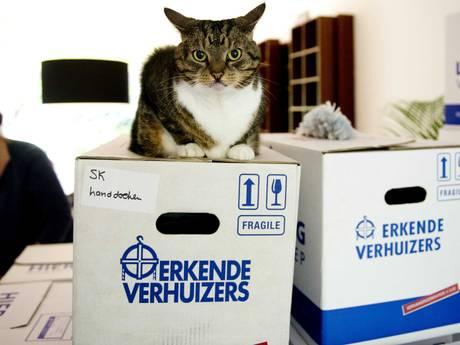 275 Amsterdammers verhuisden vorig jaar naar Den Bosch; check hier waar jouw plaatsgenoten vandaan komen