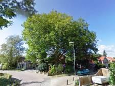 Altena: particuliere boom geen zaak van gemeente