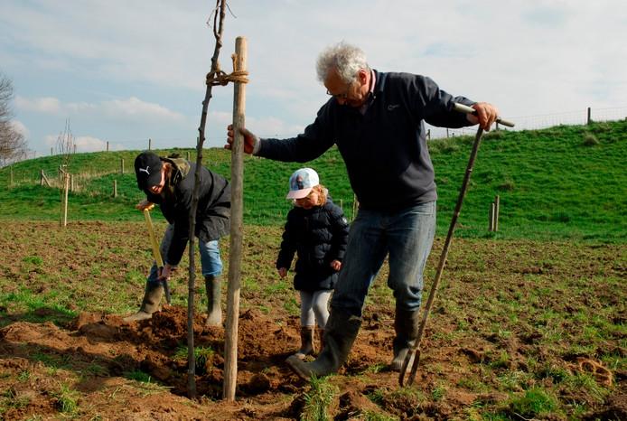 De aanplant van een fruitboom.