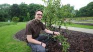 Rozentuin met 1.500 planten nieuw pronkstuk voor Plantentuin Meise