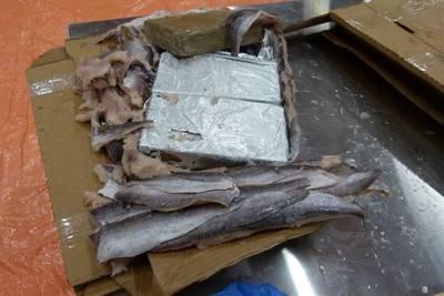 1100 kilo coke tussen bevroren vis in Rotterdamse haven