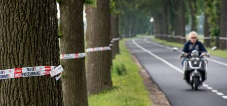West Betuwe: verschillende bomen in één laan om ziektes te voorkomen