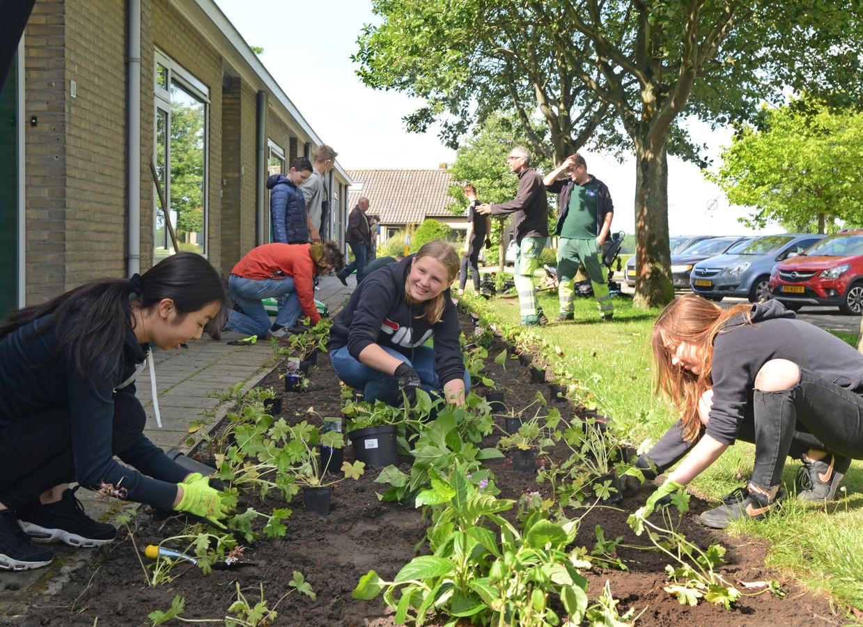 Havo en vwo-leerlingen van Pieter Zeeman moeten voor het vak technasium tuinen ontwerpen, bestellijsten maken en uiteindelijk de tuinen zelfs aanleggen. Vandaag gebeurde dat onder meer in de Ingridstraat in Scharendijke