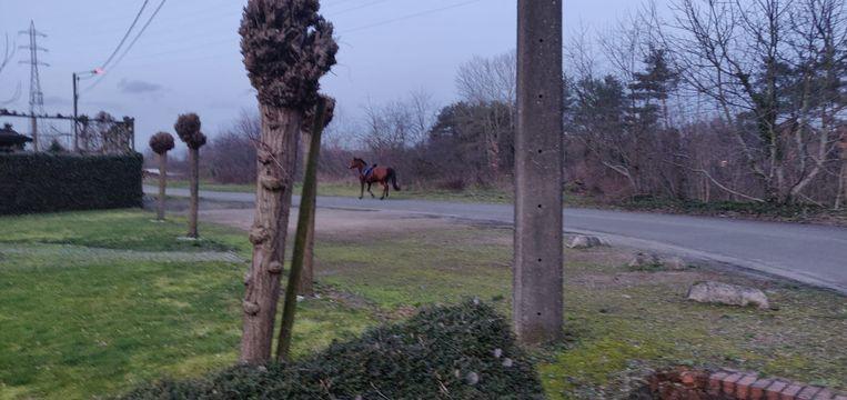 Het paard, hier nog op vrije voeten.