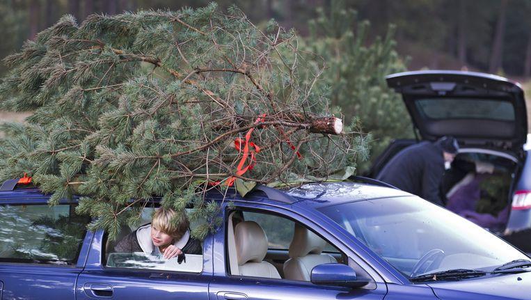 Heel wat kerstbomen verkocht vóór Sinterklaas | De Volkskrant