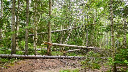 Baby sterft in moeders armen wanneer tak afbreekt in bos door extreme droogte en schorskevers in Duitsland