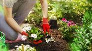 Greenyard doet z'n potgrond van de hand