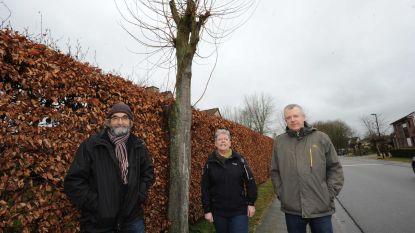 Bewoners niet gediend met kap laanbomen