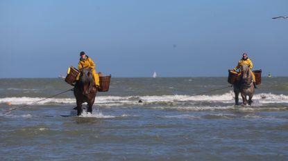 De paardenvissers mogen opnieuw de zee in maar demonstraties zijn de hele zomer verboden