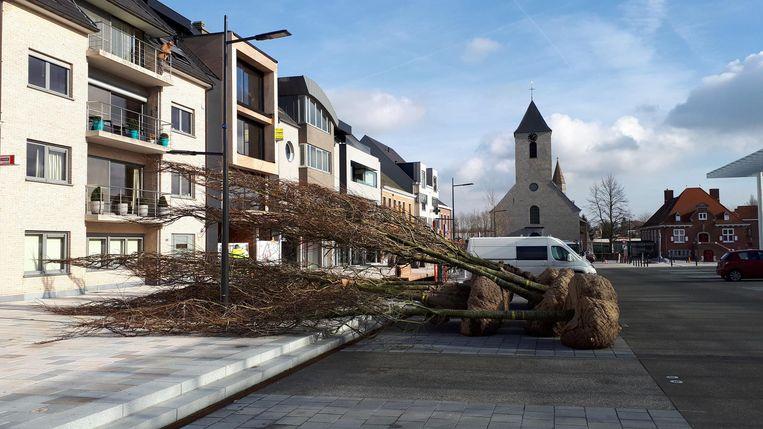 Vandaag en morgen worden 22 vijfjarige bomen geplant op het nieuwe Marktplein.