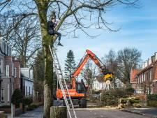 Weer bezwaar tegen bomenkap Bavelselaan