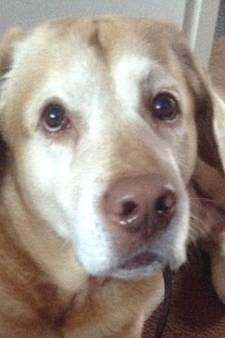 Drie honden vergiftigd in Helmerhoek in Enschede