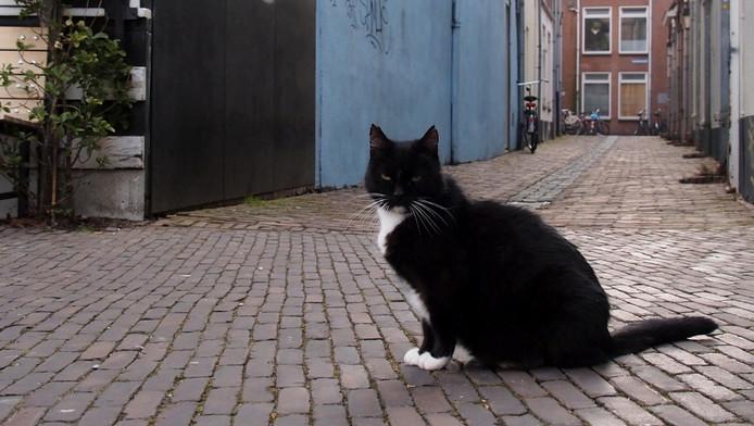 De kat van het Utrechtse café heeft de mishandeling niet overleefd.