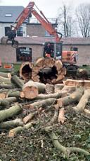 Zo zag de boom eruit na het rooien. De gemeente kon geen risico meer nemen.