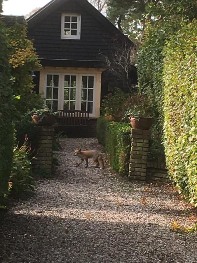 Marga (61) uit Soesterberg had een vos in haar voortuin.