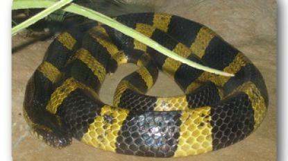 Brandweer wordt opgeroepen voor geel-zwarte slang en vindt... een geel-zwart lint.
