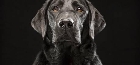 Baasje sluit hond na drie jaar durende zoektocht weer in de armen
