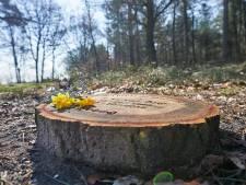 Groen licht voor natuurbegraafplaats op Landgoed Mookerheide