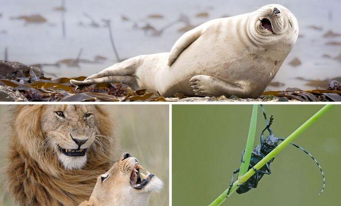 les Comedy Wildlife Photography Awards.