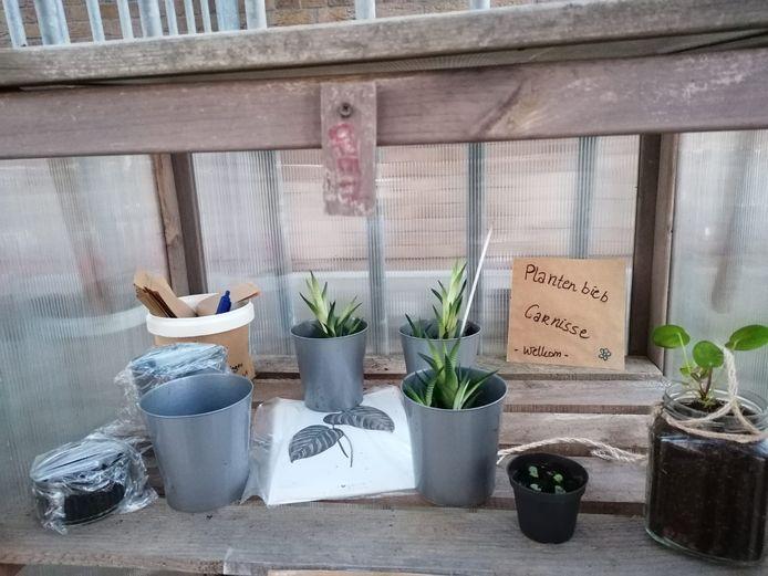 Plantenbieb Carnisse
