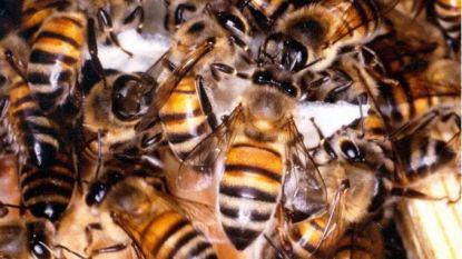 300.000 bijen zoemen op dak van grootste tuincentrum van België