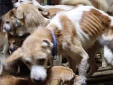 Japanse autoriteiten vinden 164 honden in klein huisje gepropt