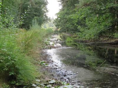 West-Brabantse natuur snakt ook naar water