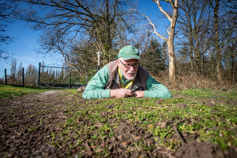 Paul van Wielink zoekt in natuurgebied De Kaaistoep naar grijze zandbijen.