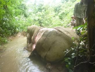 In opmars: stroperij van olifantenhuiden