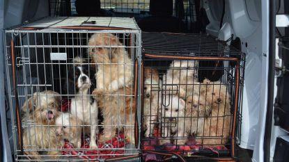 Zestiger moet vergoeding van 22.800 euro betalen nadat hij blijft procederen omdat hij geen dieren meer mag houden