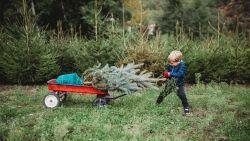 Oh denneboom-gids: tips om de perfecte kerstboom te kiezen én er lang van te genieten