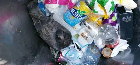 Wijkagent redt duif uit afvalbak in Winterswijk