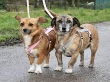 Dotty en Lotty, twee begripvolle dametjes die een nieuw huisje zoeken