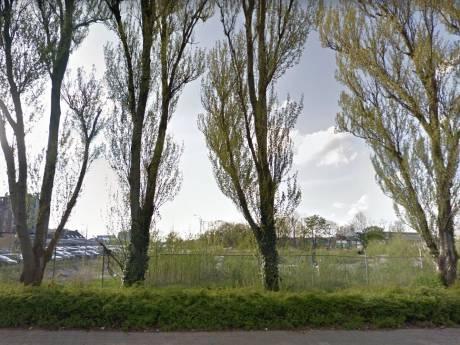 Bezwaar tegen bomenkap: 'Groene poort Dordt in gevaar'