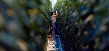 'Nederlandse overheid is schuldig aan uitbuiting van arbeidsmigranten'