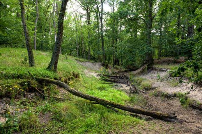 Natuurmonumenten en Waterschap Vallei en Veluwe proberen de beken op de Veluwe te beschermen door zandzakken te plaatsen. Grote delen zijn al drooggevallen. De takken liggen in de beek om het water minder hard te laten stromen.