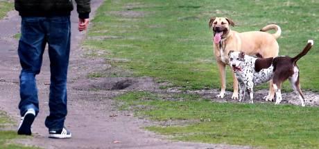 Honden mogen straks loslopen bij elke Dinkellandse kern